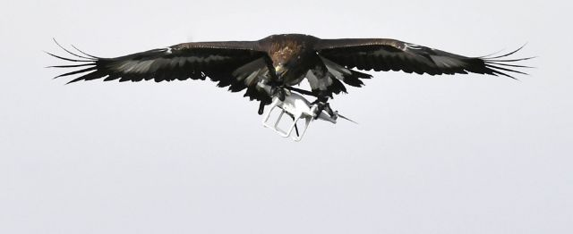 eagles-vs-drones.jpg